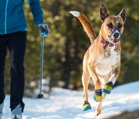 Adiestramiento-canino-BEC-botas-anti-heridas