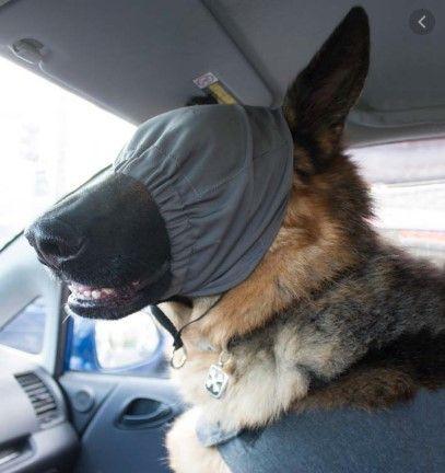 Adiestramiento-canino-BEC-calming-cap