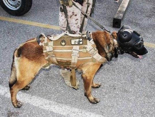 Adiestramiento-canino-BEC-casco-de-proteccion