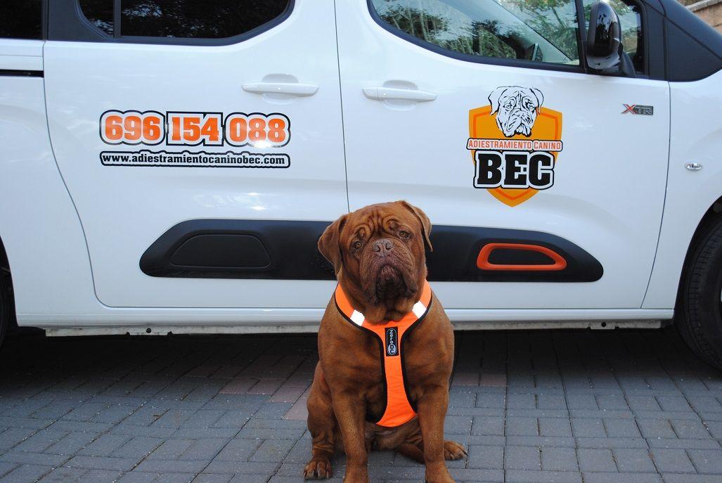 Adiestramiento_Canino_BEC_nueva_furgoneta_trabajo_Flor