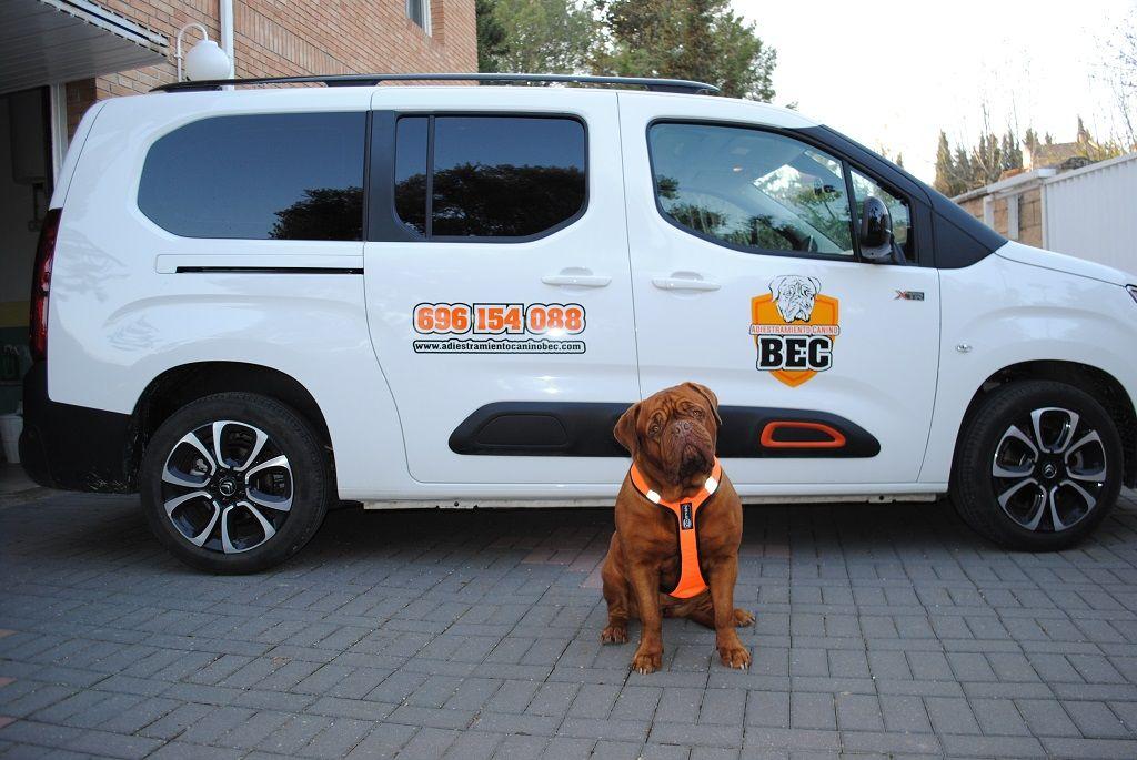 Adiestramiento_Canino_BEC_nueva_furgoneta_trabajo_Flor_2