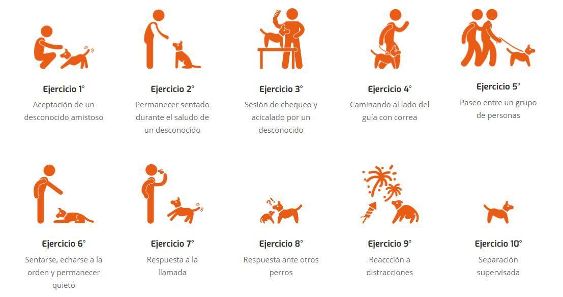 10 ejercicios Ciudadano Canino Ejemplar Adiestramiento Canino BEC
