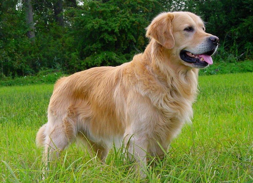 Adiestramiento-canino-BEC_perro-sano-primavera-verano