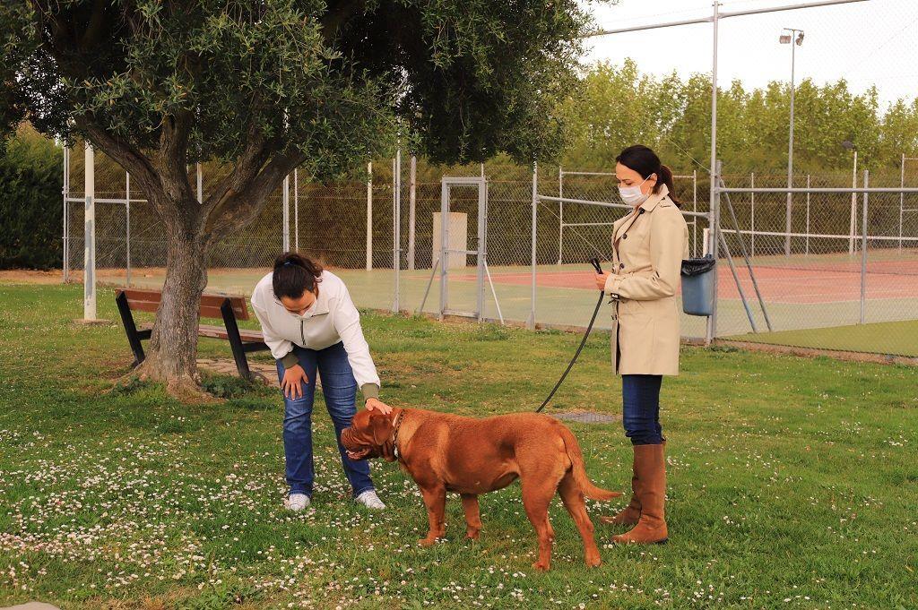 Ejercicio-N1-Ciudadano-Canino-Ejemplar_Adiestramiento-canino-BEC