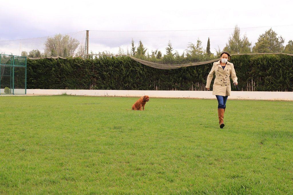 Ejercicio-N10-Ciudadano-Canino-Ejemplar_Adiestramiento-canino-BEC