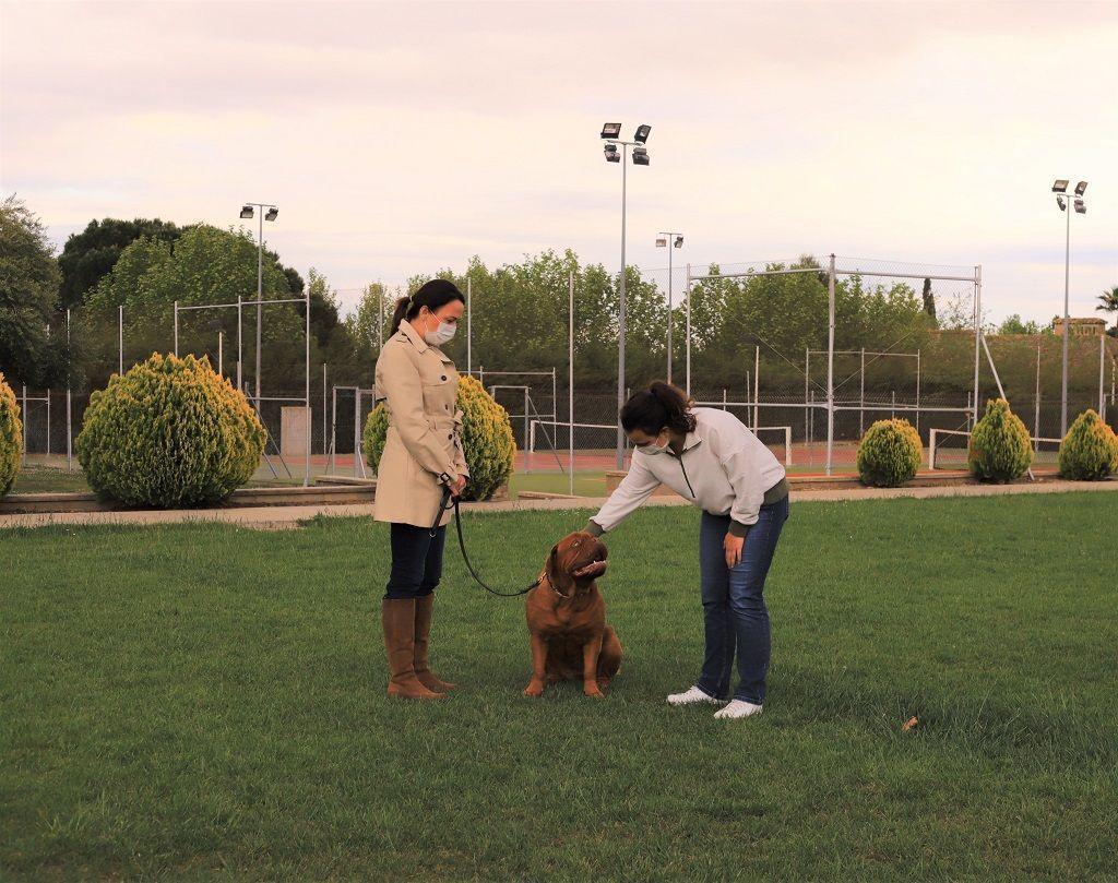 Ejercicio-N2-Ciudadano-Canino-Ejemplar_Adiestramiento-canino-BEC