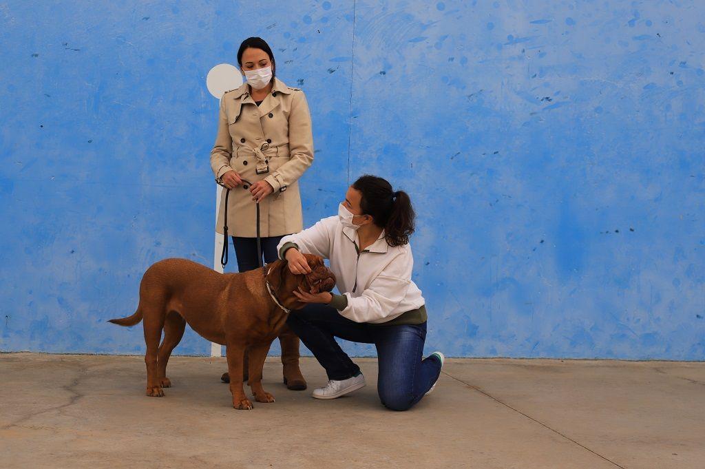 Ejercicio-N3-Ciudadano-Canino-Ejemplar_Adiestramiento-canino-BEC