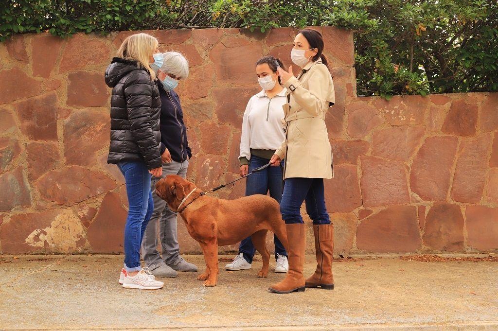 Ejercicio-N5-Ciudadano-Canino-Ejemplar_Adiestramiento-canino-BEC