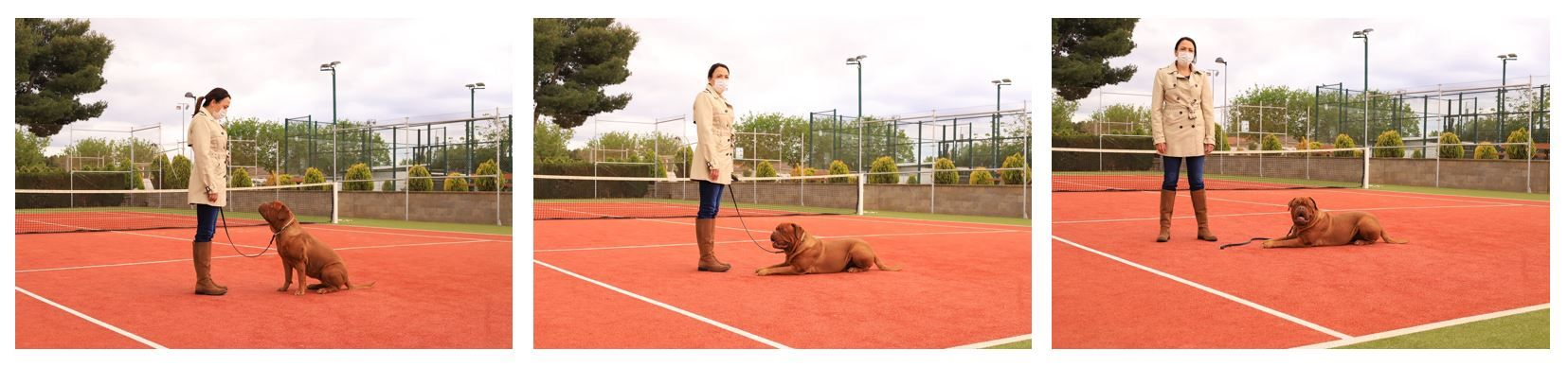 Ejercicio-N6-Ciudadano-Canino-Ejemplar_Adiestramiento-canino-BEC