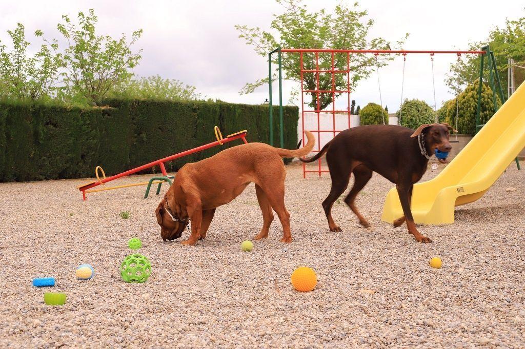 Ejercicio-N8-Ciudadano-Canino-Ejemplar_Adiestramiento-canino-BEC