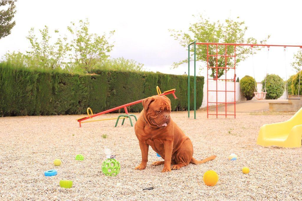 Ejercicio-N9-Ciudadano-Canino-Ejemplar_Adiestramiento-canino-BEC