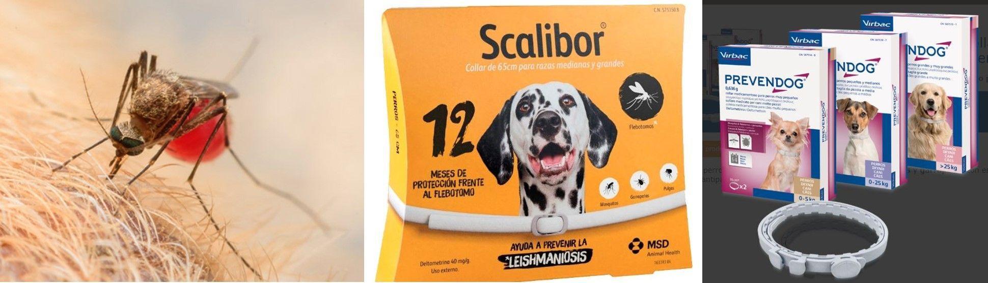 medicamentos-prevencion-leishmania-canina