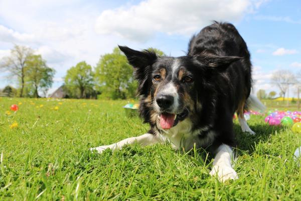 reaccion-canina-perro-invitando-a-jugar