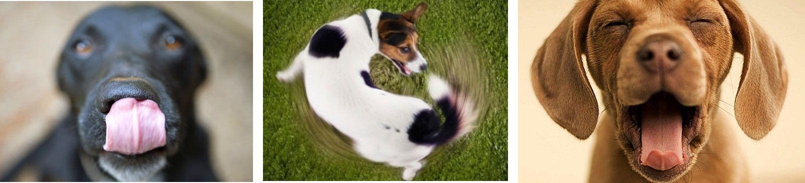 reacciones-caninas-1-Adiestramiento-canino-BEC