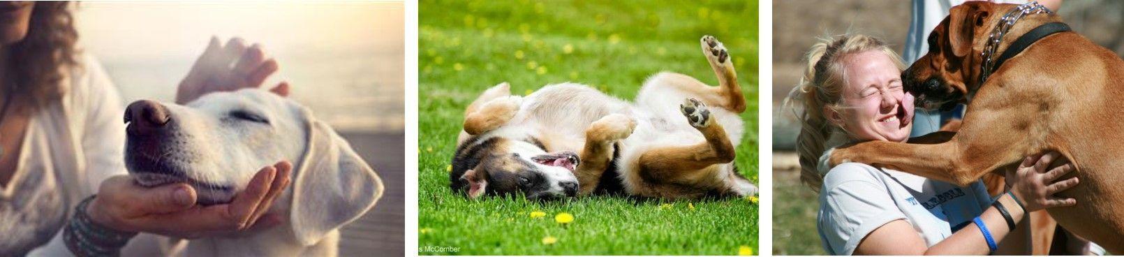 reacciones-caninas-3-Adiestramiento-canino-BEC