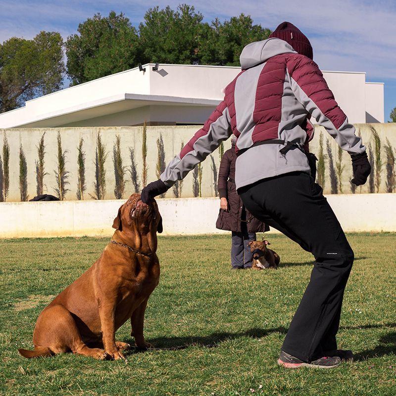 adiestramiento_canino_BEC_obediencia_dogo_burdeos (3)