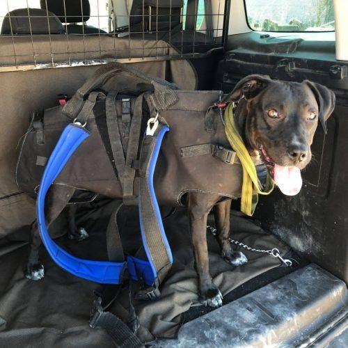Adiestramiento canino BEC_Rescate (7)