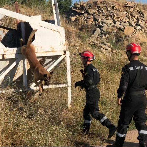 Adiestramiento canino BEC_Rescate (9)