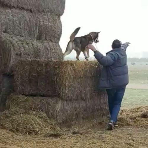 Adiestramiento canino BEC_confianza (1)