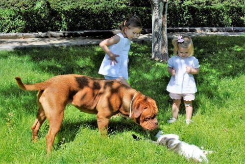 Adiestramiento canino BEC_confianza e indiferencia (1)