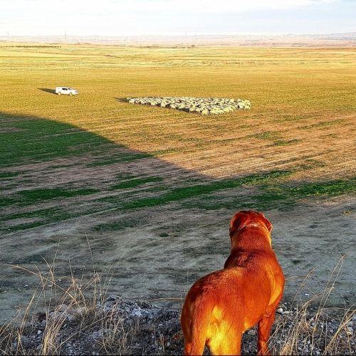 Adiestramiento canino BEC_confianza e indiferencia (2)