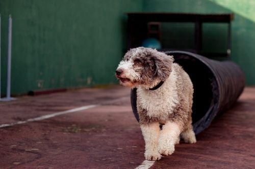 Adiestramiento canino_BEC_Propiocepcion (1)