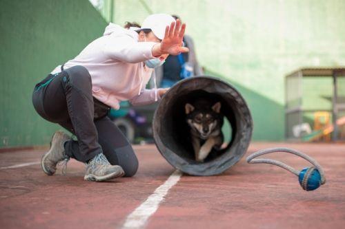 adiestramiento_canino_BEC_agility_husky (1)