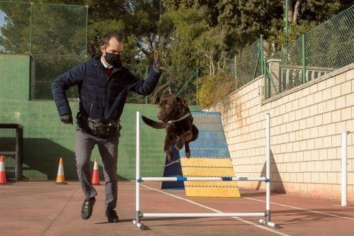 adiestramiento_canino_BEC_agility_labrador_retriever