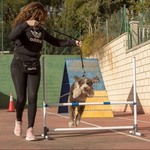 adiestramiento_canino_BEC_agility_perro_aguas_español