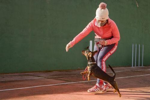 adiestramiento_canino_BEC_agility_teckel (2)