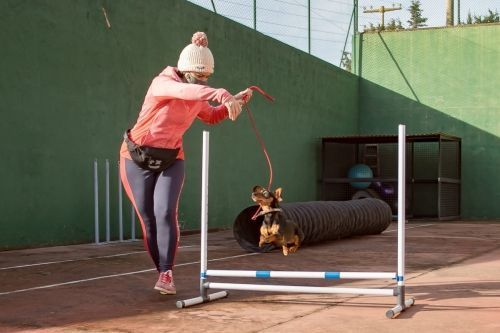 adiestramiento_canino_BEC_agility_teckel